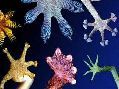 biomimicry-image-01