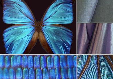 biomimicry1